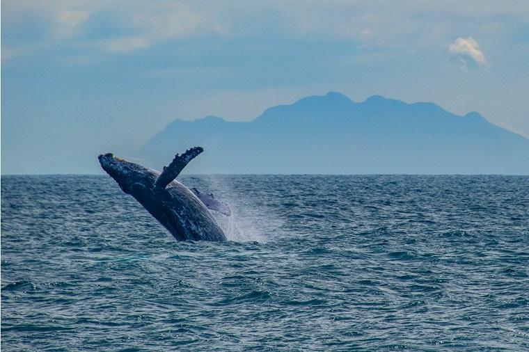 Turismo Litoral Praia ferias Bahia Baleias ES - Temporada para observação de baleias transforma férias em espetáculo na costa brasileira